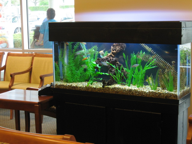 Fish Aquarium Austin Bar With An Aquarium Dancefloor